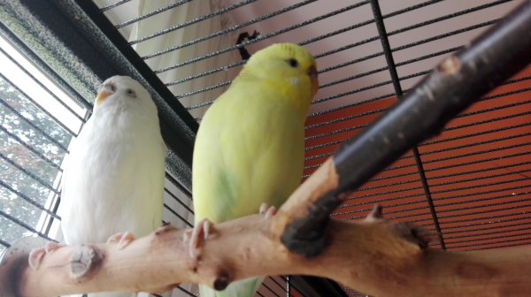 Baby (links) und Finchen (rechts): Die Abrisshelfer