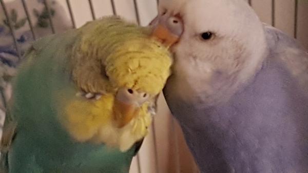 Kiwi und Merlin