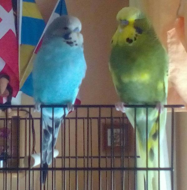 Sweety und Sunny
