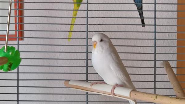 Meine Blanca