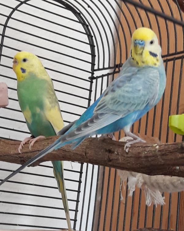 Kimmie & Blue