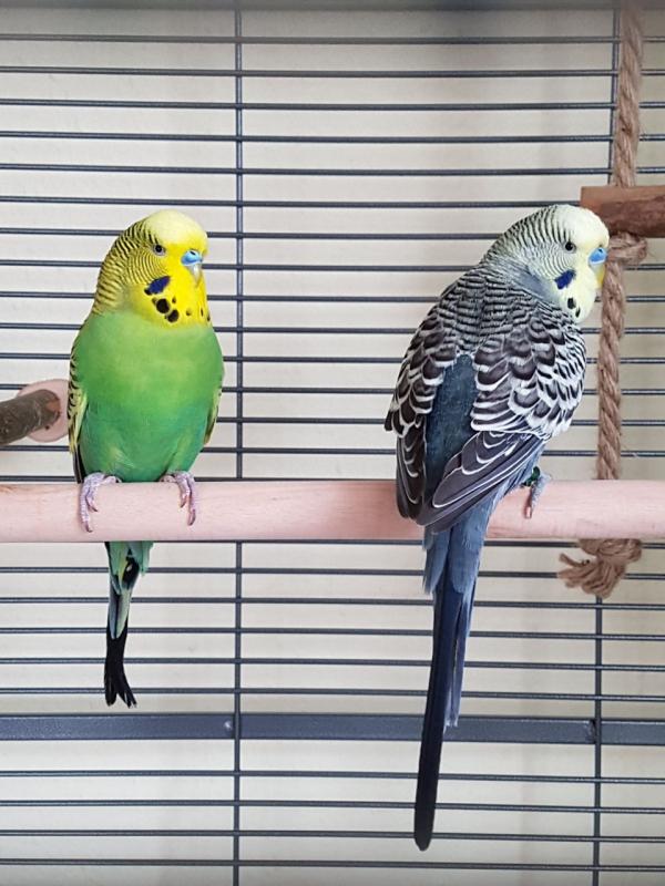 Bubi & Kurti