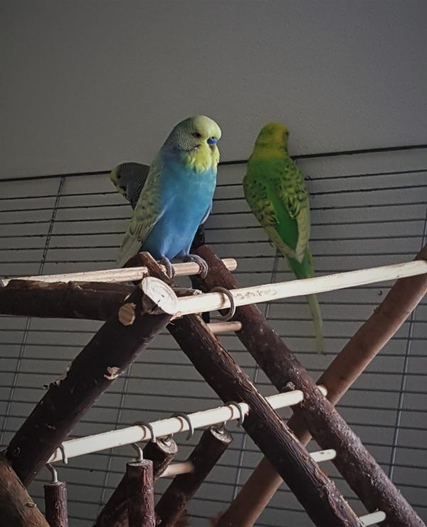 Blue, Luna und Polly