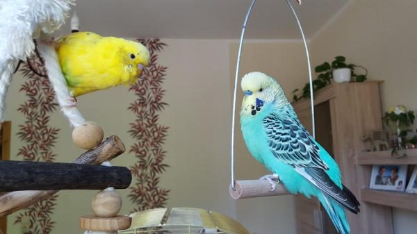 Eddy & Nevio