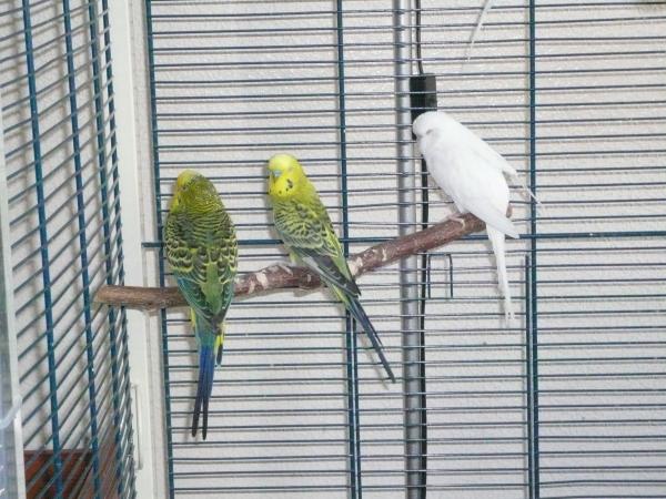 Marius (li), Henry (Mitte) und Flynn (re)