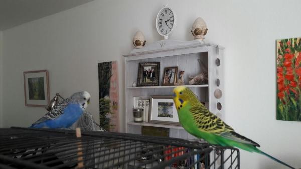 Fred und Jamie im Wohnzimmer :)