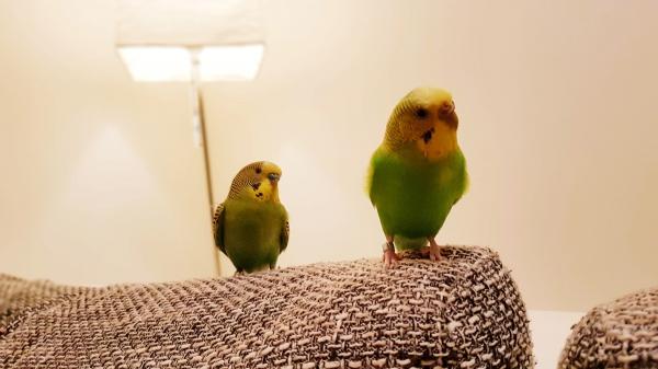 Pünktchen und Antoneo erkunden unser Sofa