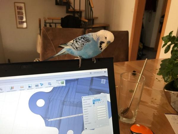 Elvis auf dem Laptop