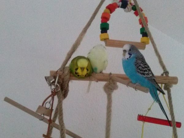 Joschi, Charlie, Frieda