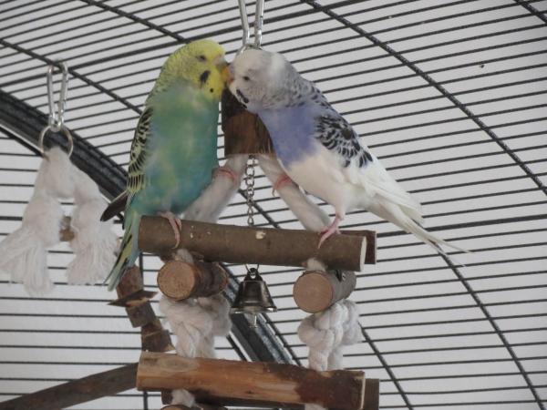 Rose und Billie lieben sich