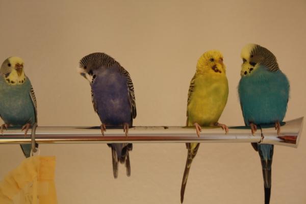 Die Vier auf der Gardinenstange