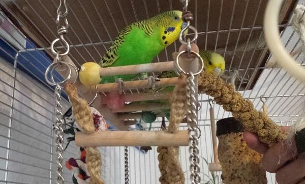 Milo und seine Mausi