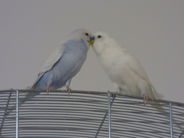 Grey und Snowball