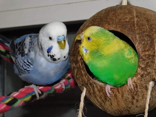 Kampf um die Kokosnuss