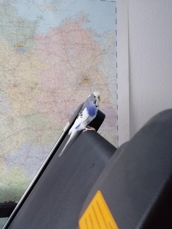 Erkundungsflug zum Laufband
