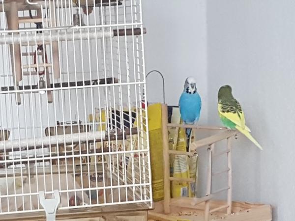 Pucki und Bubi ein Team