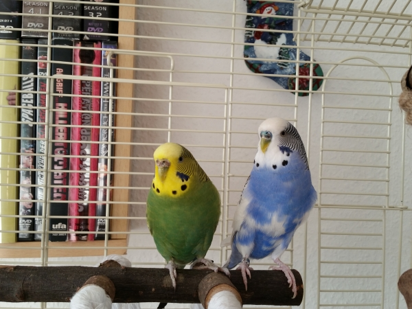 Chibi und Fred