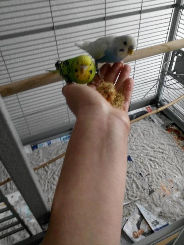Mango und Lilo