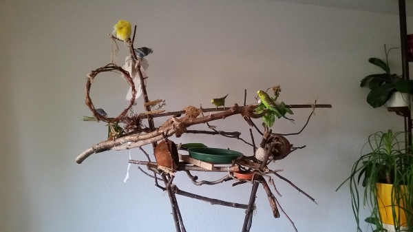 Flugbaum mit Bad