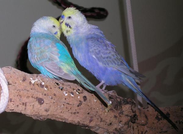 Susi und Strolch - das ist Liebe