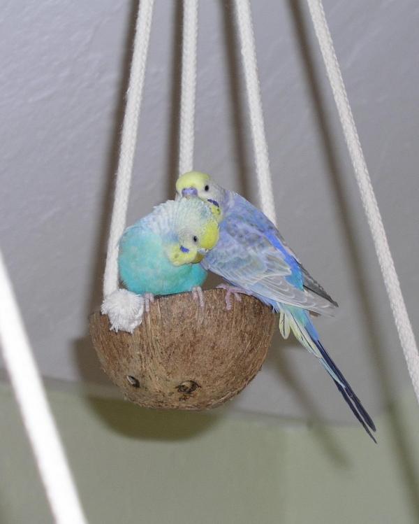 Susi und Strolch in der Kokosschaukel