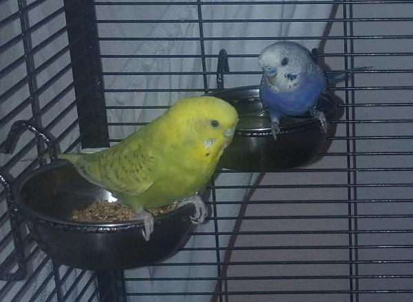 Blue und Macic