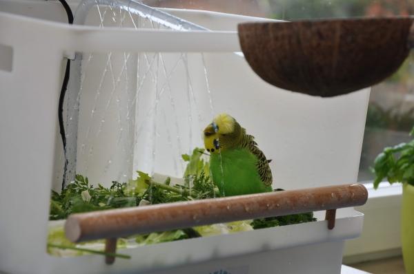 Maxi duscht