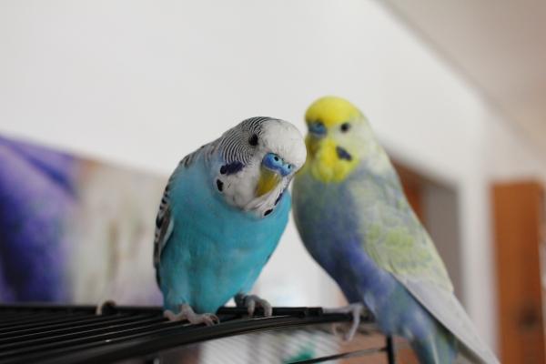 Petri und Frederic mal draußen