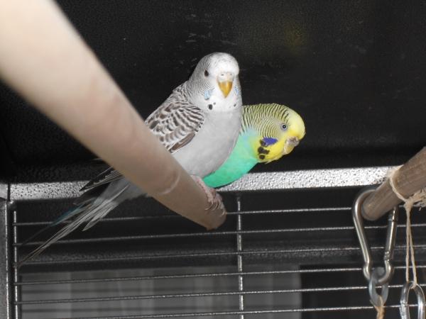 Petit und Lina