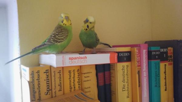 Trulla und Roberto in der Sonntagsschule