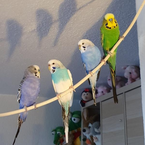 Gruppenfoto von meinen Wellis