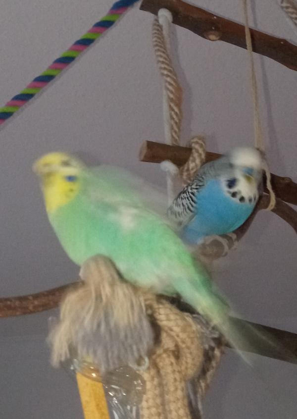 Joanna und Elvis