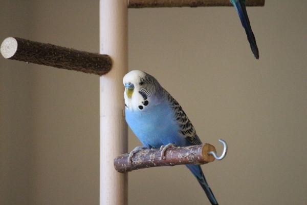Bernie auf dem Vogelbaum