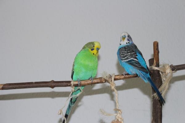Fritz und Willi