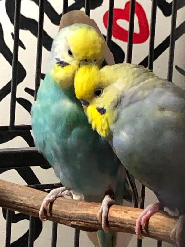 Kiwi und Blubi ganz verschmust