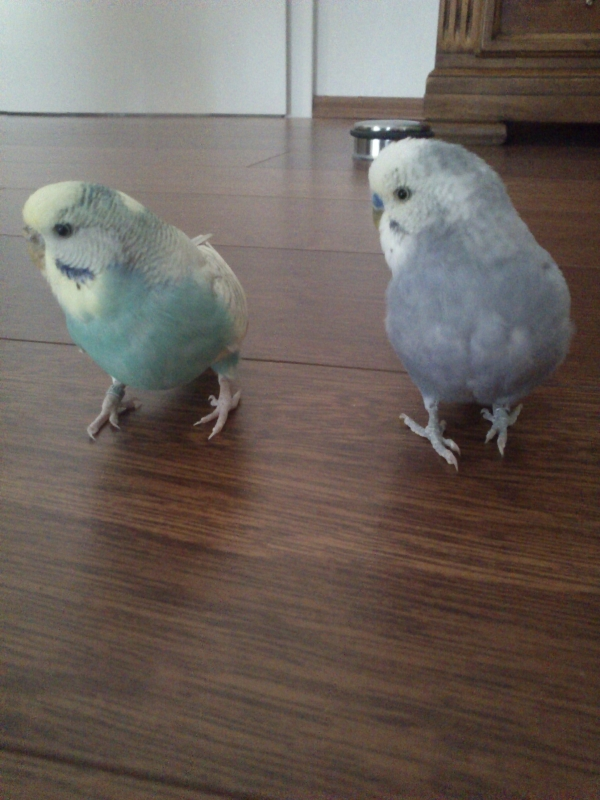 Frieda & Paulchen