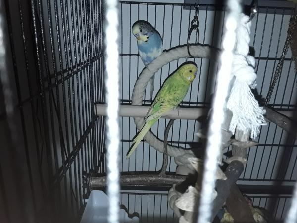 Heidi und Birdy