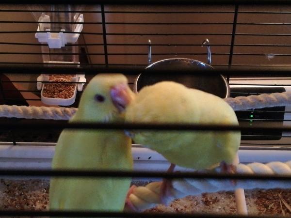 Choco und Tweety