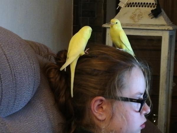 Tweety und Cocko