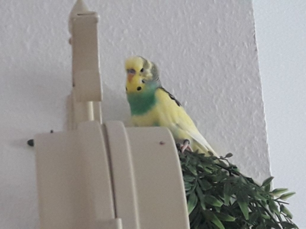 Yoshi auf Entdeckungstour :)