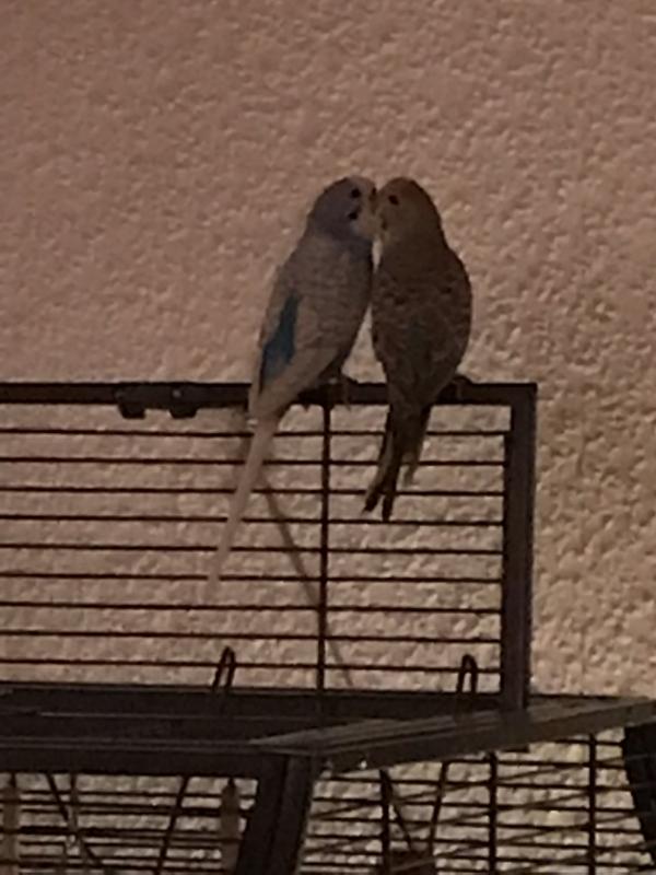 Nelli und Marvin