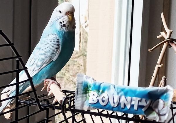 Lookalike Bounty