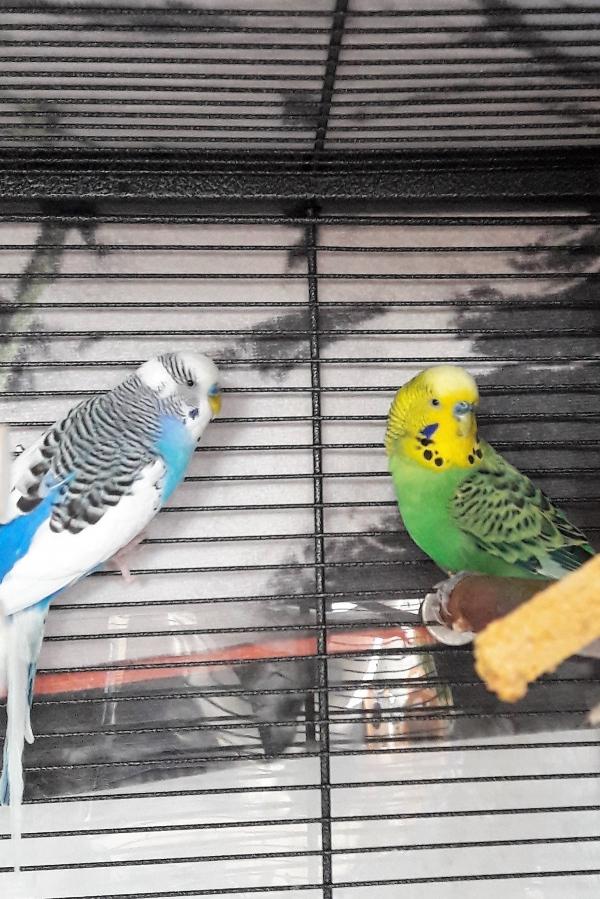 Cookie und Ervin