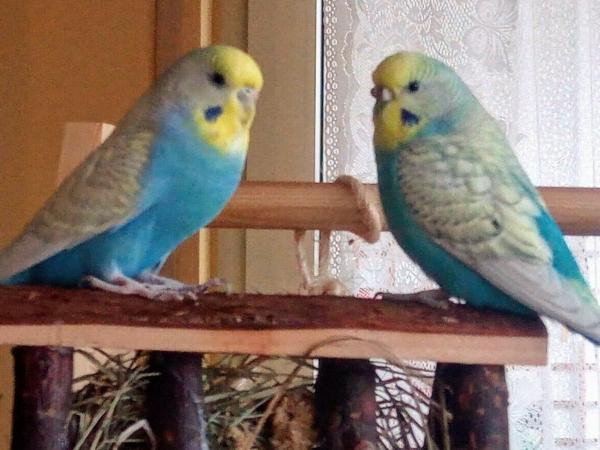 Meine hübschen Hennen Polly und Toni