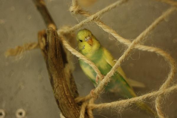 Kiwi hängt in den Seilen