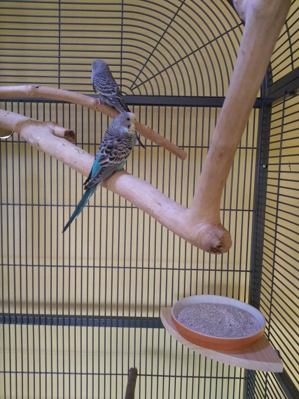 Blue und Rocky