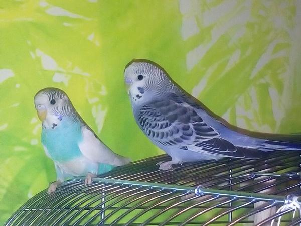 Rocky und Fleckchen