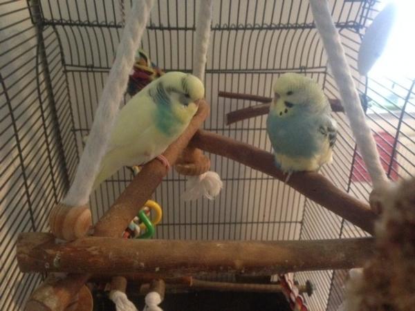 Pitti und Bubi auf ihrer Schaukel