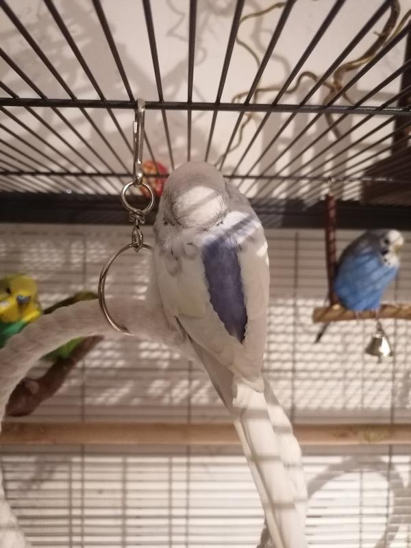 Blueberry vor dem Tiefschlaf