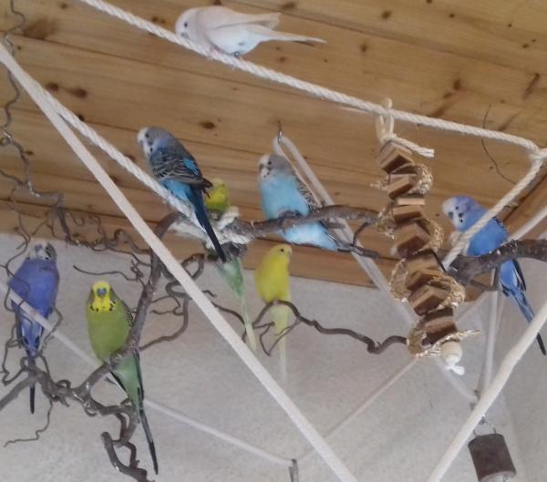 Alle meine Vögel